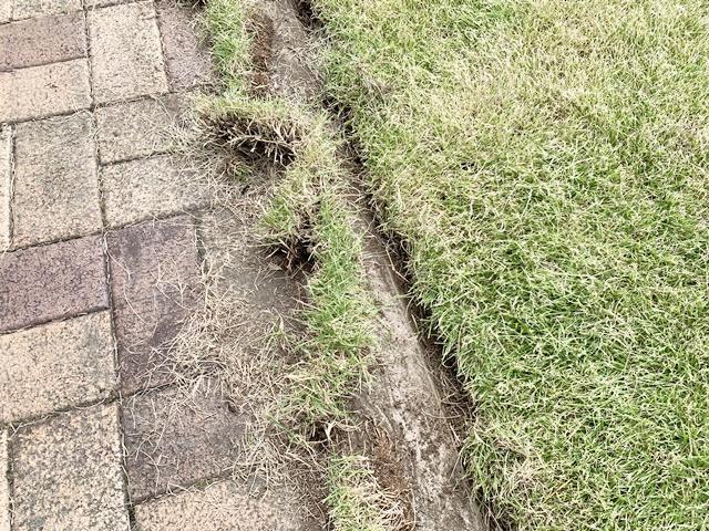 芝の根を刈り取る