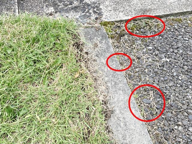 芝の根 アスファルト 侵入