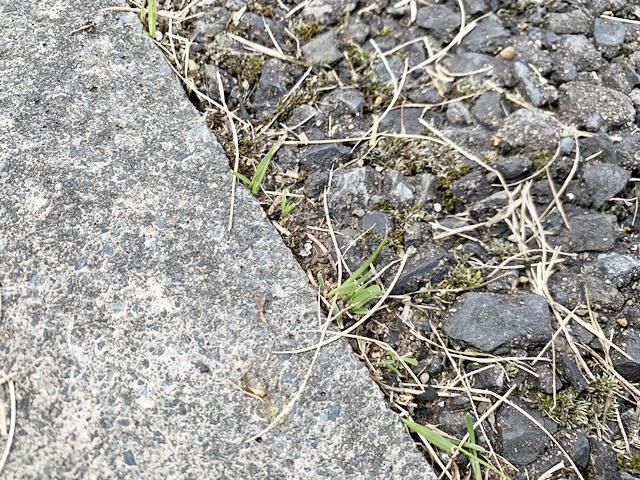 芝生の侵入を防ぐ対策!芝の根ストッパー効果ないので根ごとカットした。